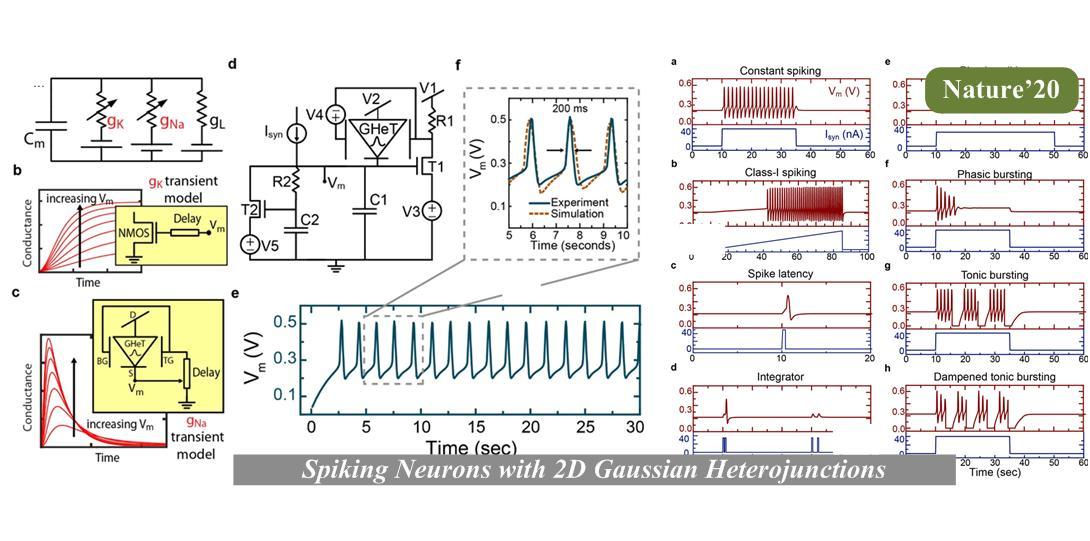 Bio-mimetic spiking neurons using 2D Gaussian heterojunction transistors